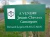Te koop: jonge Camarguepaarden