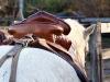 Camarguezadel op paard