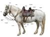harnachement Camarguepaard