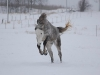 paarden-in-de-winter-3