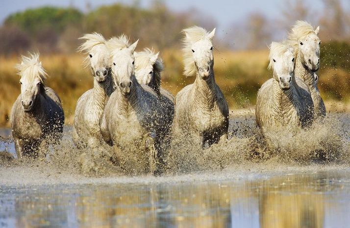 wild-horse-8